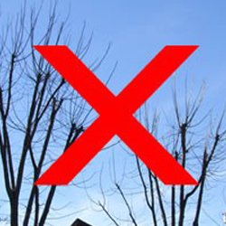 No Tree Topping - Tree Tip Center - American Tree Service - 123