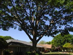 Tree Inspection New Jersey, NJ Tree Inspection Services - American Tree Service - crown