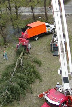 Lot Clearing - American Tree Service - lotclearing