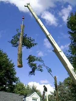 Tree Removal New Jersey, NJ Tree Removal Services New Jersey - American Tree Service - tree_removal
