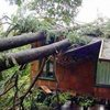 Storm Damage - American Tree Service - storm_damage