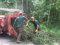 Brush Chipping - American Tree Service - brush